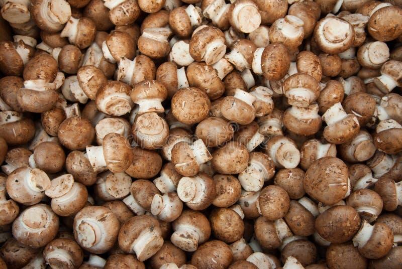 缩样采蘑菇有机shitaki 免版税库存图片