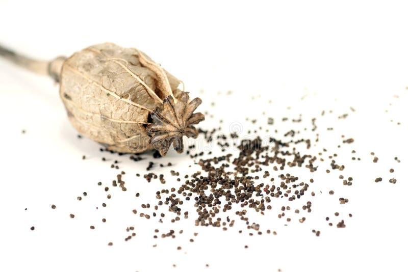罂粟种子 免版税图库摄影