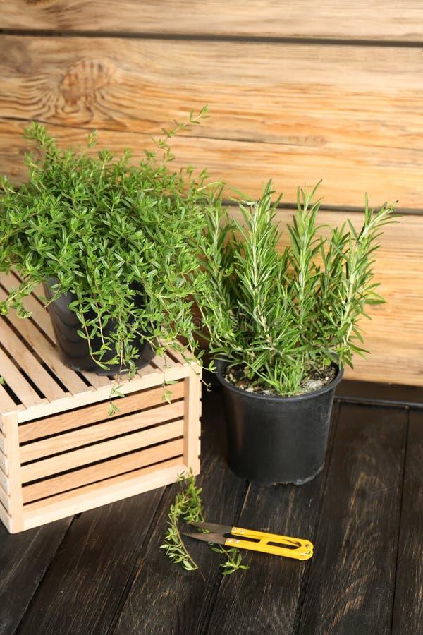 罐用在木桌上的新鲜的芳香草本 免版税库存照片
