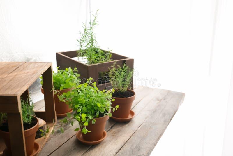 罐用在木桌上的新鲜的芳香草本 库存图片