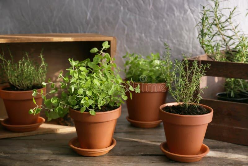 罐用在木桌上的新鲜的芳香草本 免版税库存图片