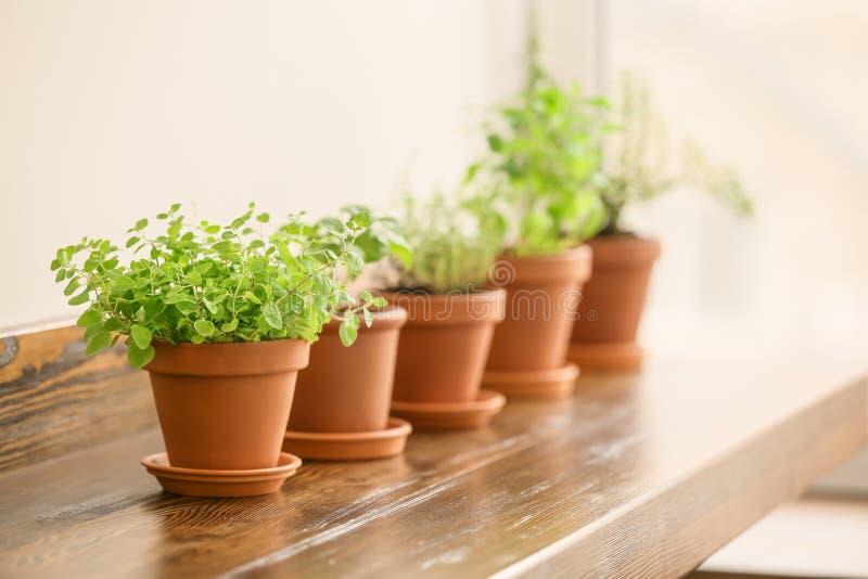 罐用在木桌上的新鲜的芳香草本 免版税图库摄影