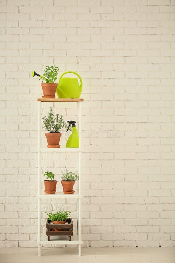 罐用新鲜的芳香草本、浪花瓶和喷壶在棚架在白色砖墙附近 库存图片