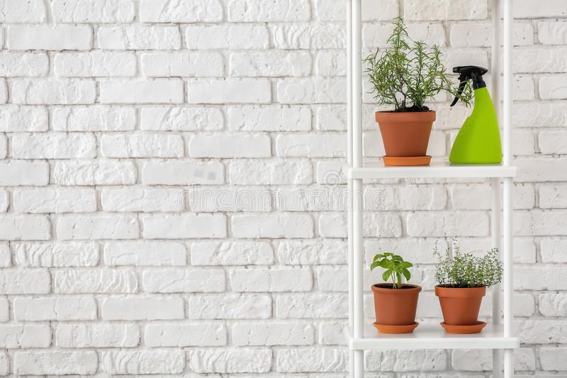 罐用新鲜的芳香草本和浪花瓶在棚架在白色砖墙附近 库存照片
