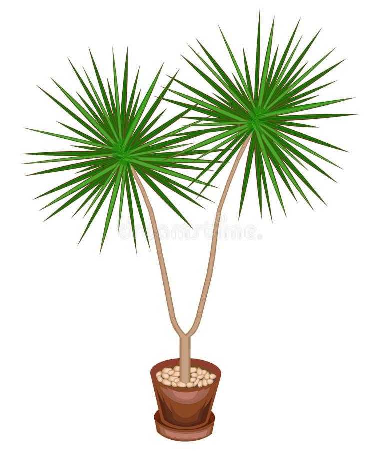罐的一棵美丽的植物 龙血树属植物将装饰您的房子和办公室 装饰常青树 r 向量例证