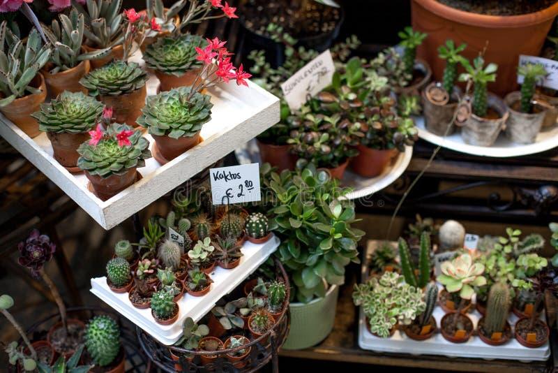 罐的各种各样的小五颜六色的多汁植物在花市场上 有选择聚焦的多汁庭院 库存照片