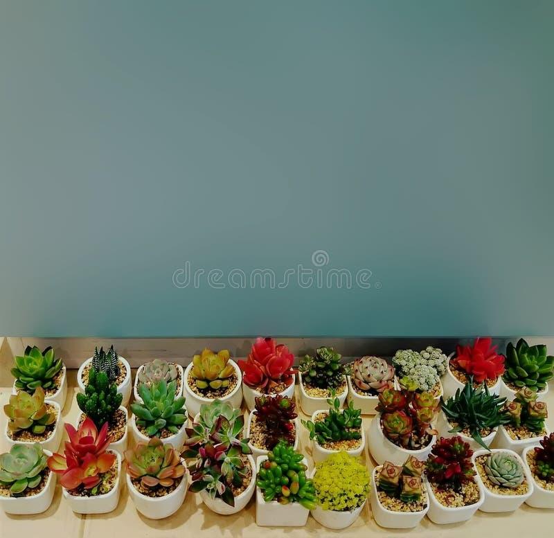 罐的很多仙人掌植物 免版税库存图片