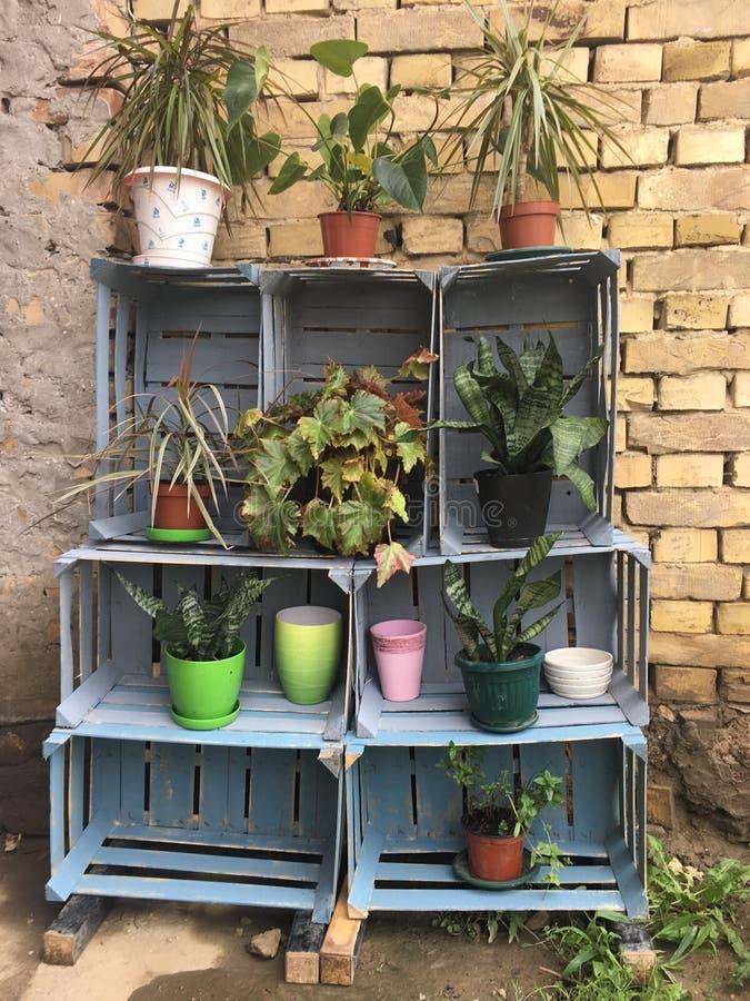 罐的植物在架子 免版税库存图片