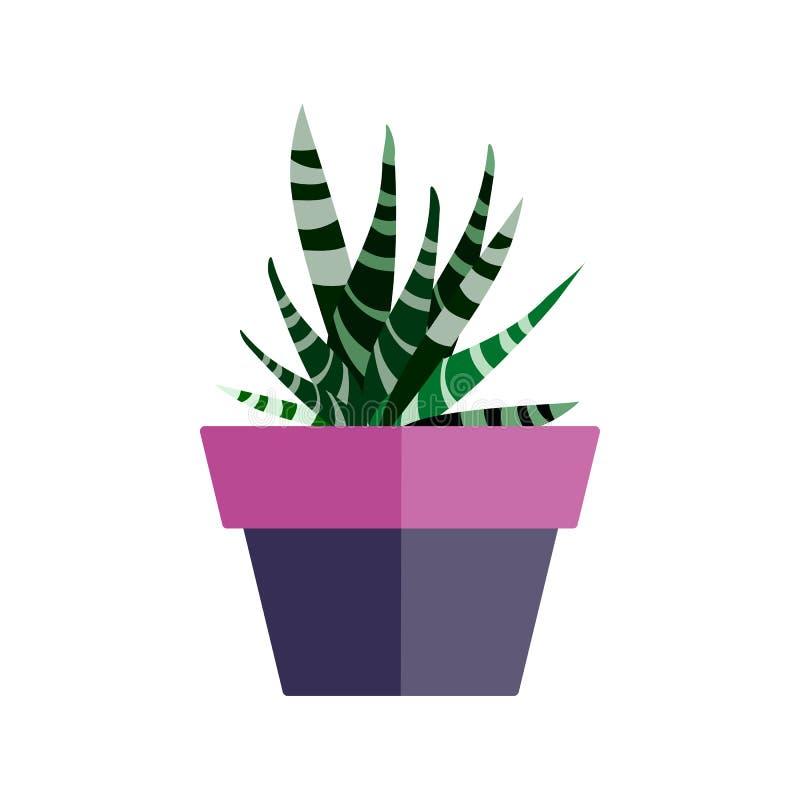 罐的温室植物 平叶子的仙人掌 向量例证