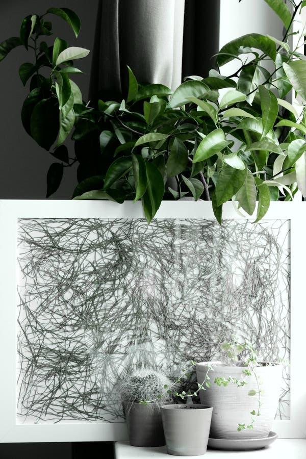 罐的绿色植物在家 免版税库存图片