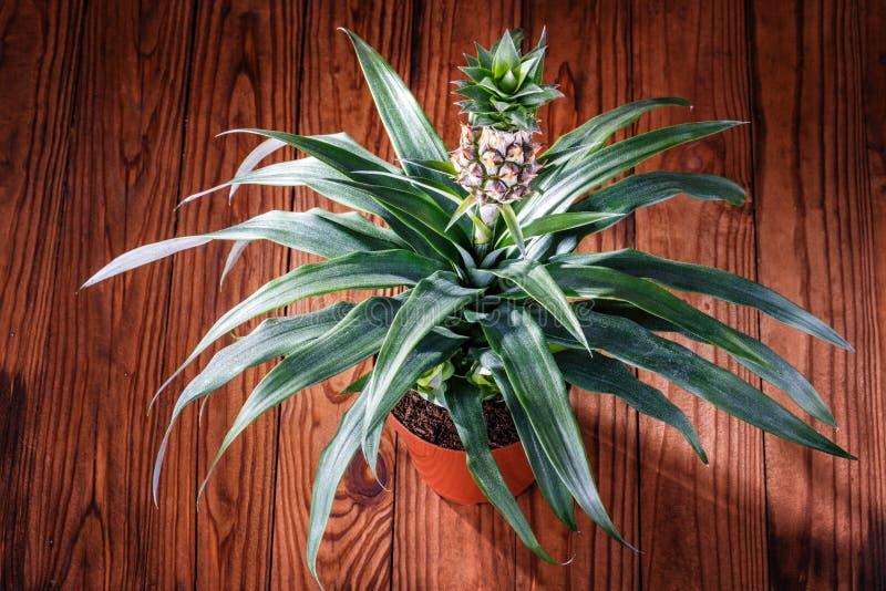 Download 罐菠萝木头背景 库存图片. 图片 包括有 工厂, 背包, 异乎寻常, 叶子, 绿色, 查出, 空白, 食物 - 72361261