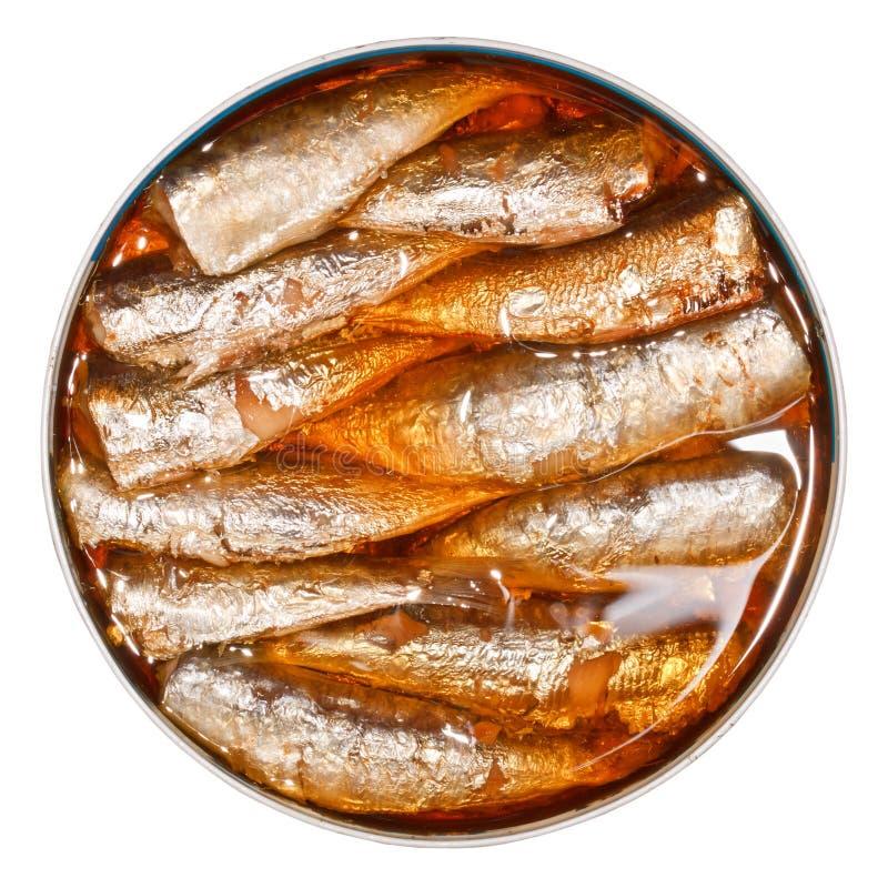 罐装沙丁鱼 图库摄影