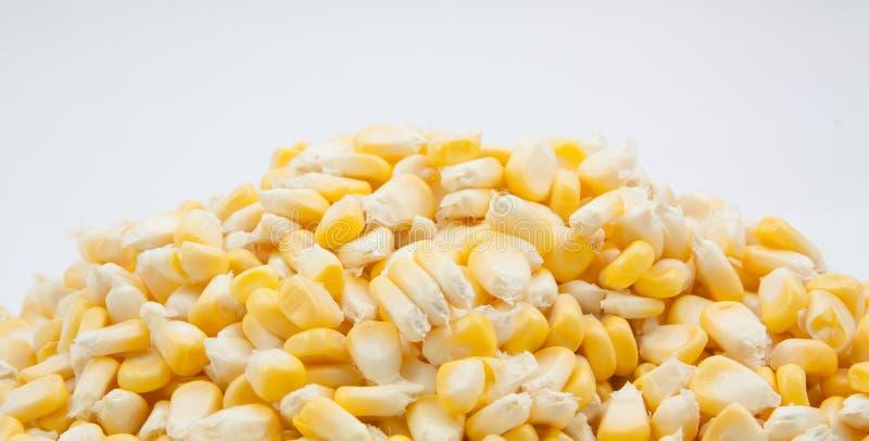 罐装玉米背景白色 库存照片