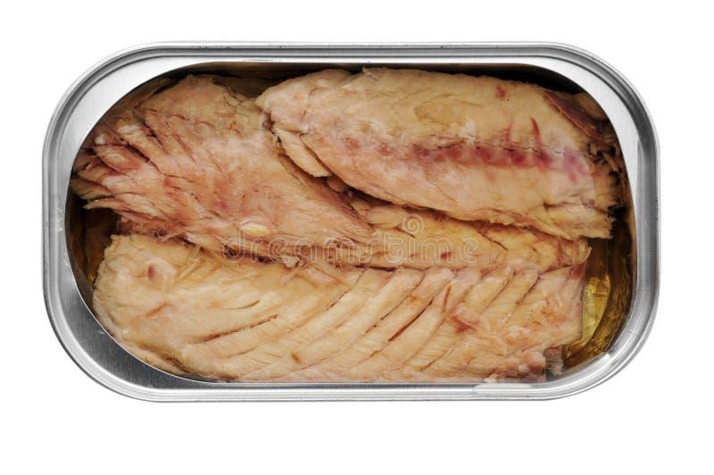 罐装鲭鱼 免版税库存照片