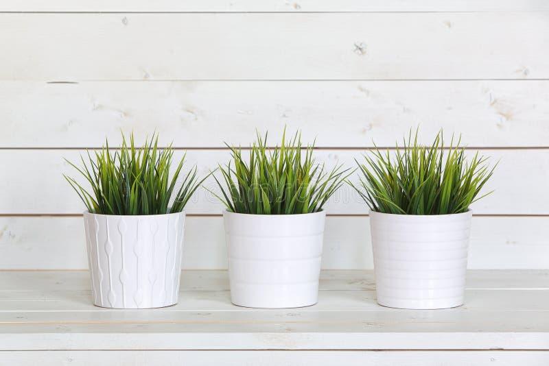罐绿色植物 免版税库存照片