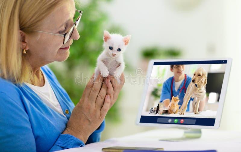 网上咨询兽医 库存照片