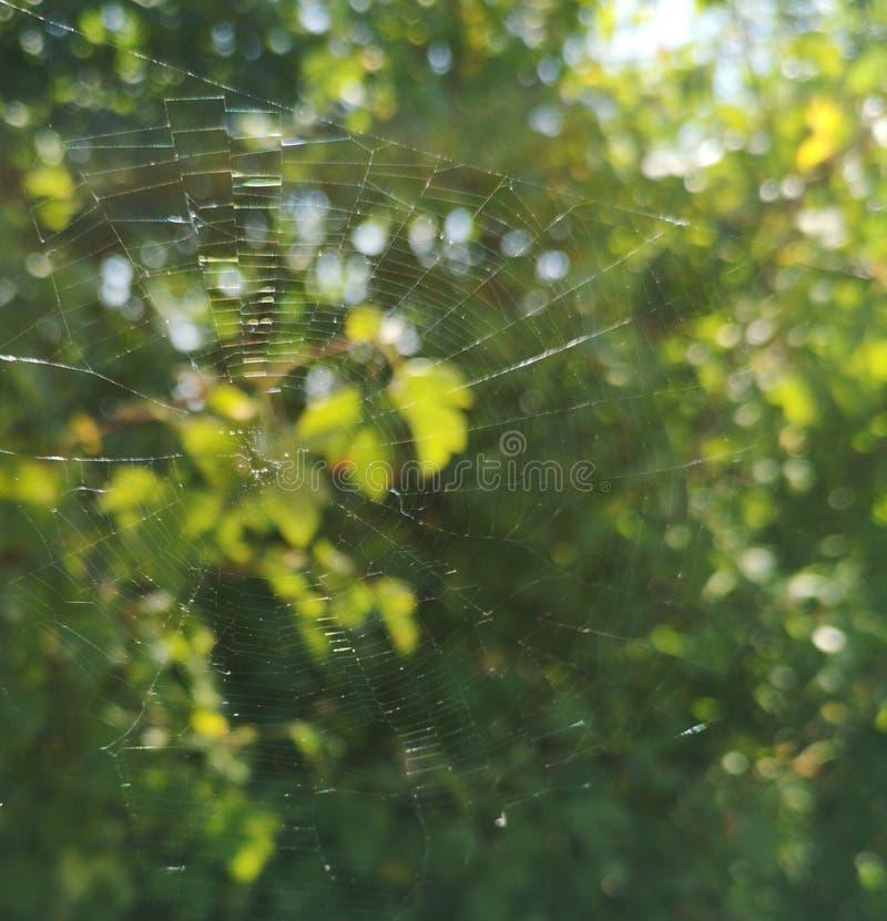 网在圆的森林里 免版税库存照片