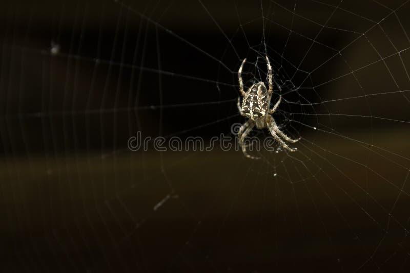 网的蜘蛛烈士 库存照片