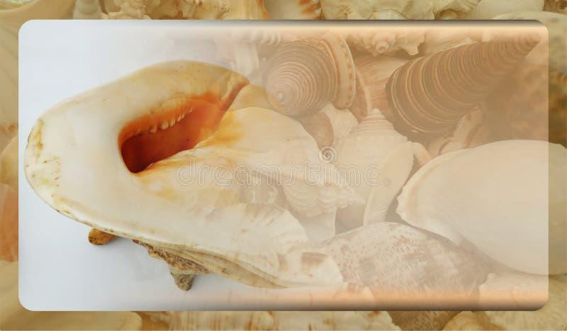 网站的,抽象信息图表模板设计抽象海壳背景模板 免版税库存照片
