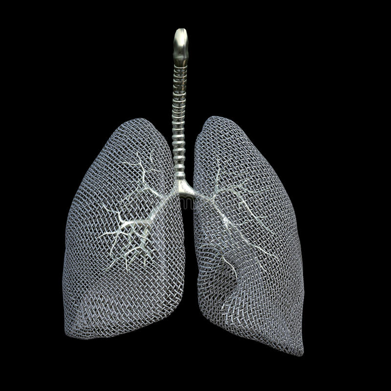 滤网肺 库存照片