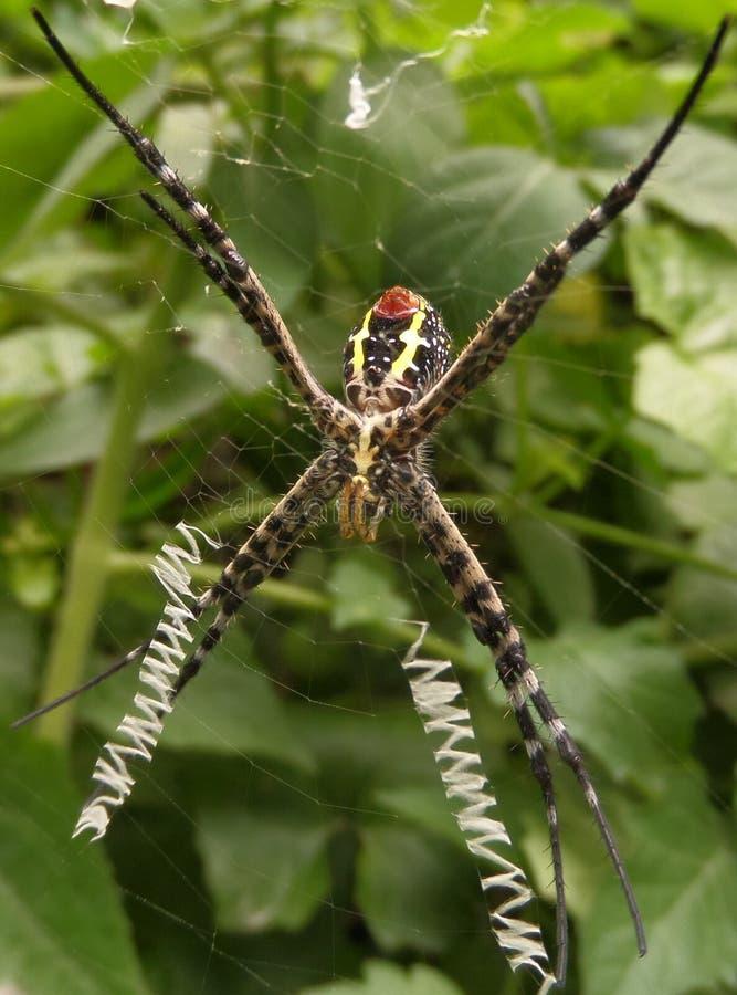 网络蜘蛛 库存图片