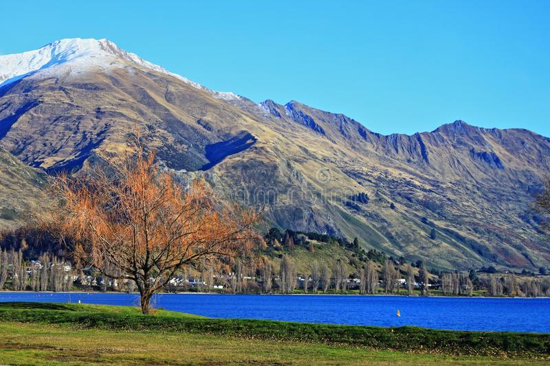 罗伊的峰顶瓦纳卡和瓦纳卡湖公园 免版税库存照片