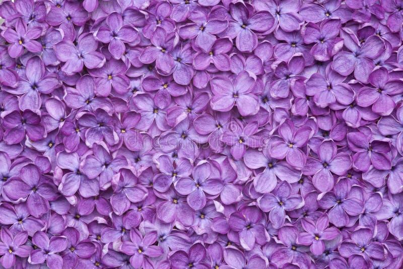 紫罗兰色淡紫色花背景 库存图片
