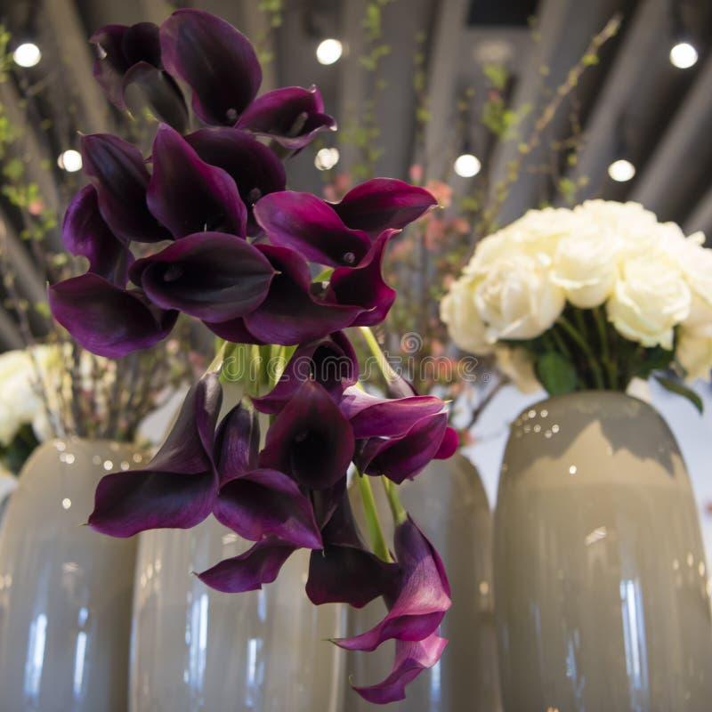 紫罗兰色的水芋属 库存图片