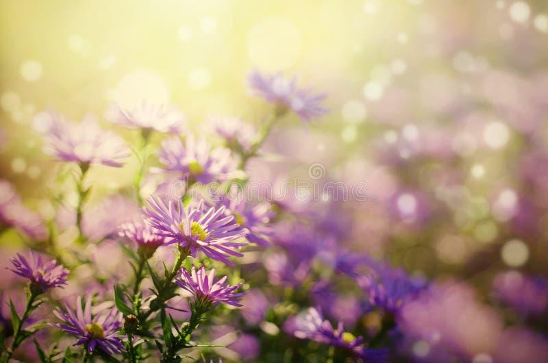 紫罗兰色花 免版税库存图片