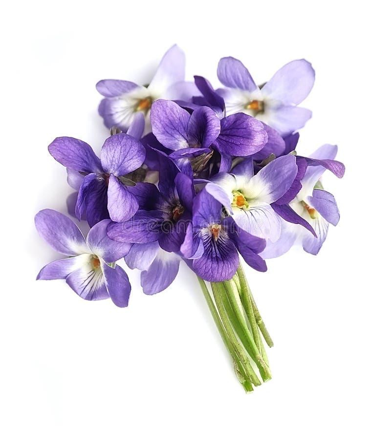 紫罗兰花花束  免版税库存图片