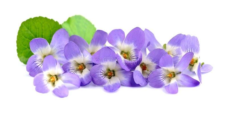 紫罗兰花花束  库存照片