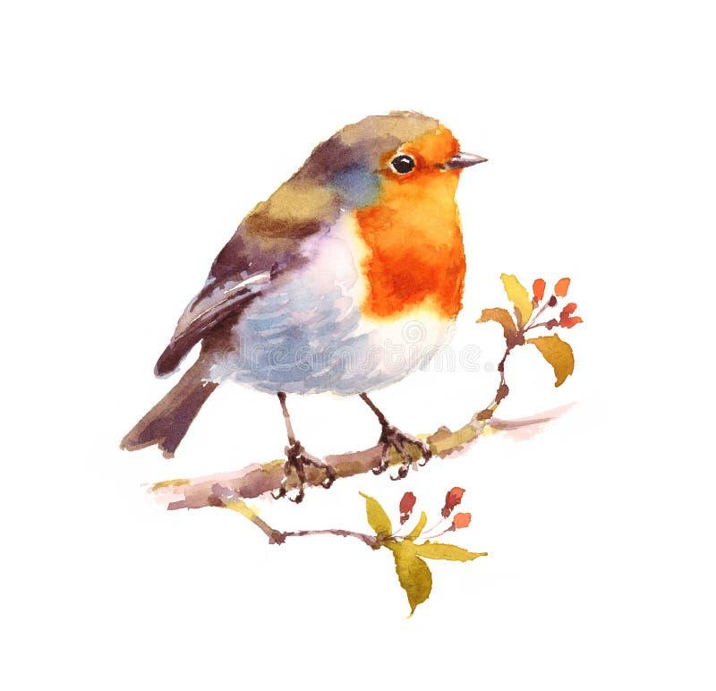罗宾水彩手画鸟的例证 皇族释放例证