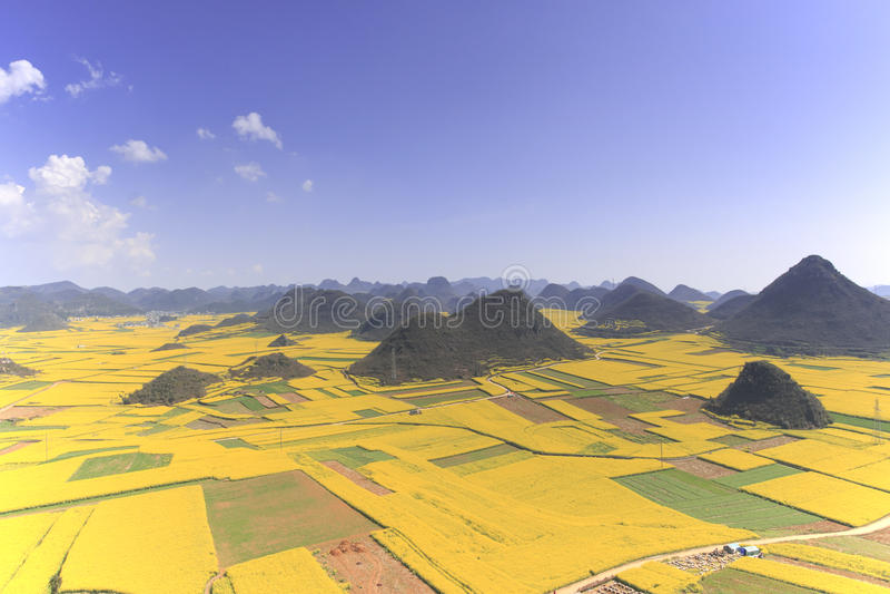 罗平油菜籽花在云南中国 图库摄影