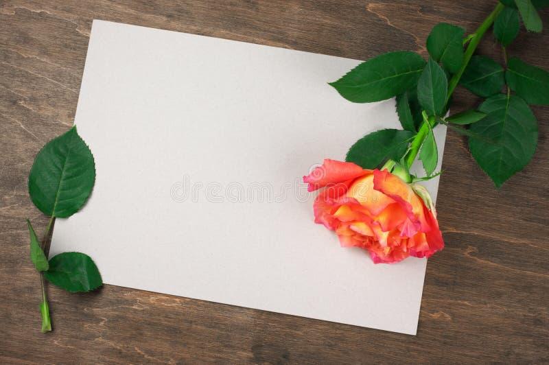 罗斯和空白纸 库存照片