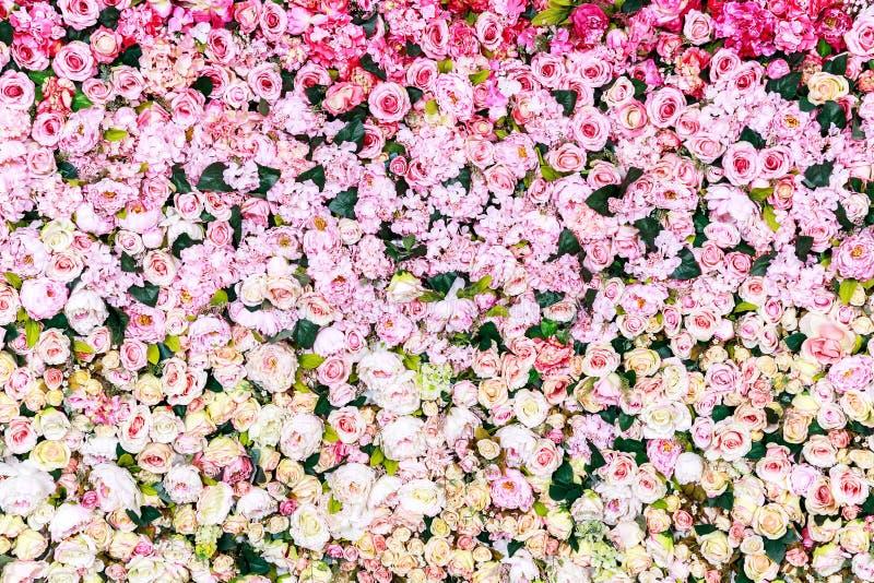 罗斯开花背景,纹理 图库摄影