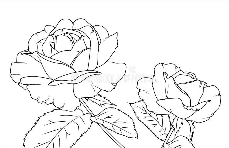 罗斯开花草稿剪影概述手图画 库存例证