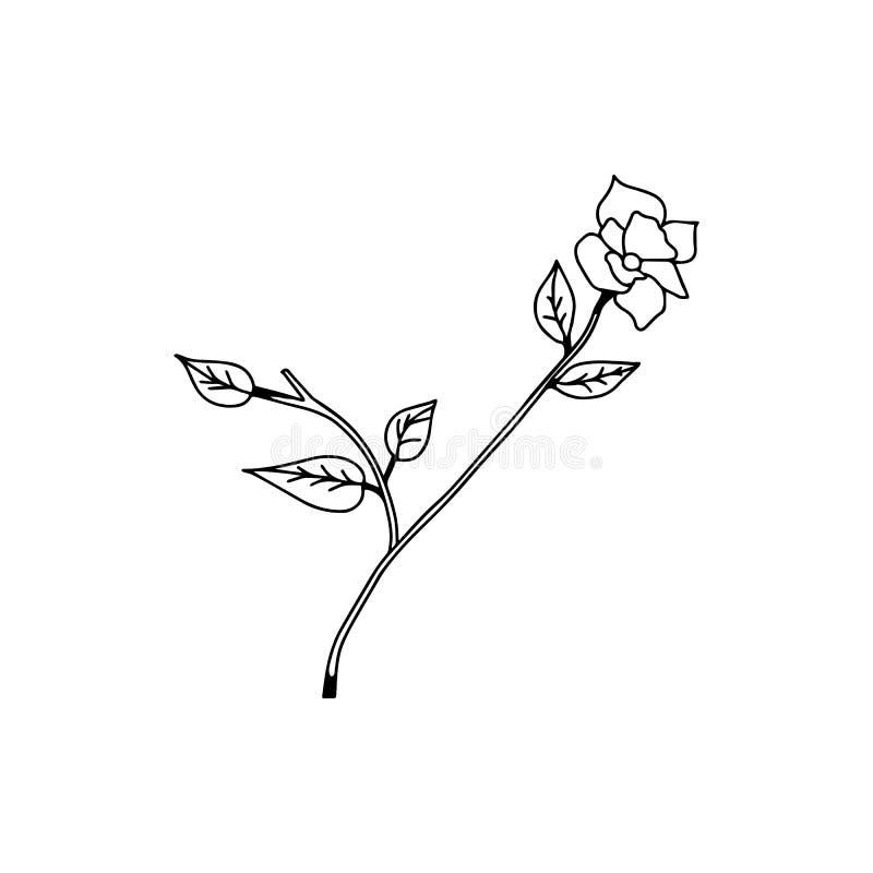 罗斯手拉的线传染媒介,玫瑰艺术,例证商标 库存例证