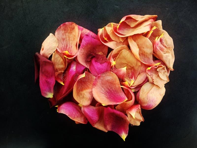 罗斯玫瑰花瓣的抽象华伦泰心脏有织地不很细背景 库存照片