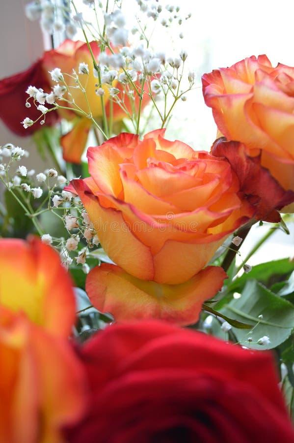 罗斯,玫瑰花束  图库摄影