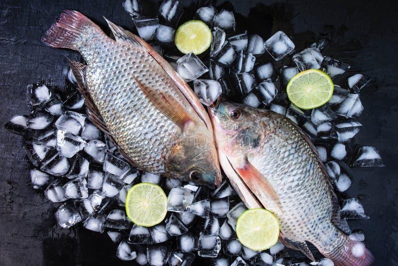 罗非鱼鲜鱼在冰的与柠檬酱 免版税库存图片