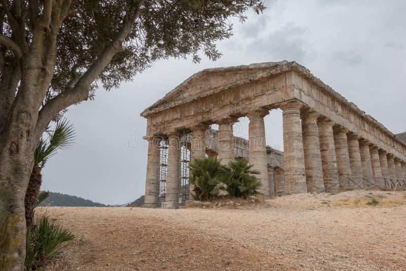 罗马寺庙在橄榄树下在Segesta 图库摄影