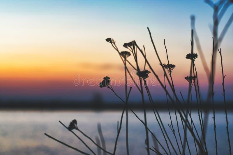 罗马尼亚布加勒斯特的拉库尔莫里湖,有些植物前景秀丽,背景中夕阳美丽,对比度高 库存照片