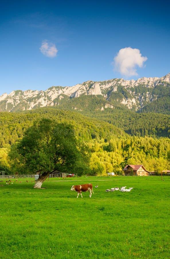 罗马尼亚风景在特兰西瓦尼亚,喀尔巴阡山脉,Plaiul Foii种田 图库摄影