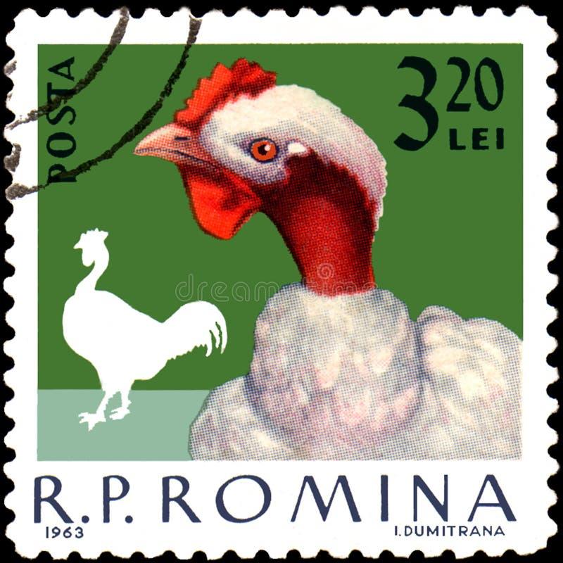 罗马尼亚-大约1963年:在罗马尼亚打印的邮票,展示竖起 向量例证