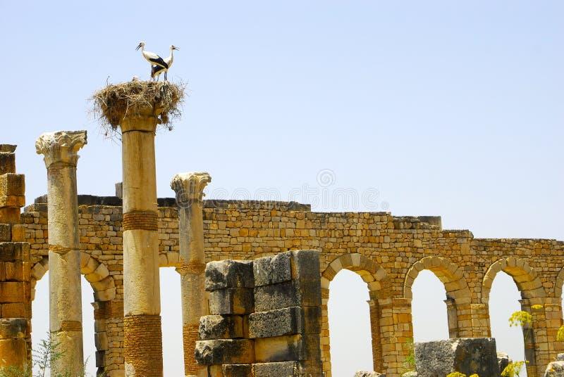 罗马废墟,摩洛哥 库存照片