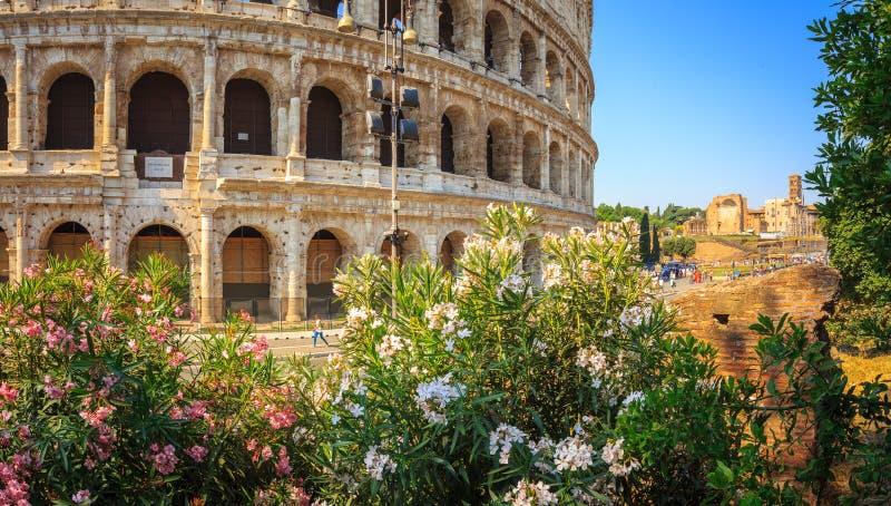 罗马斗兽场和花,罗马,意大利,欧洲 争论者罗马古老竞技场  库存图片