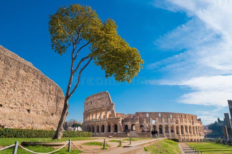 罗马斗兽场如被看见从帕勒泰恩小山在罗马,意大利 免版税图库摄影