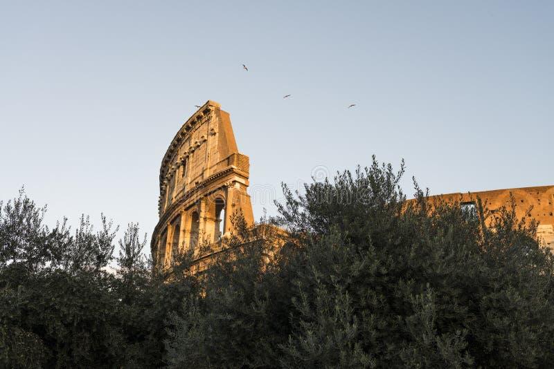 罗马斗兽场的外部在罗马 库存照片