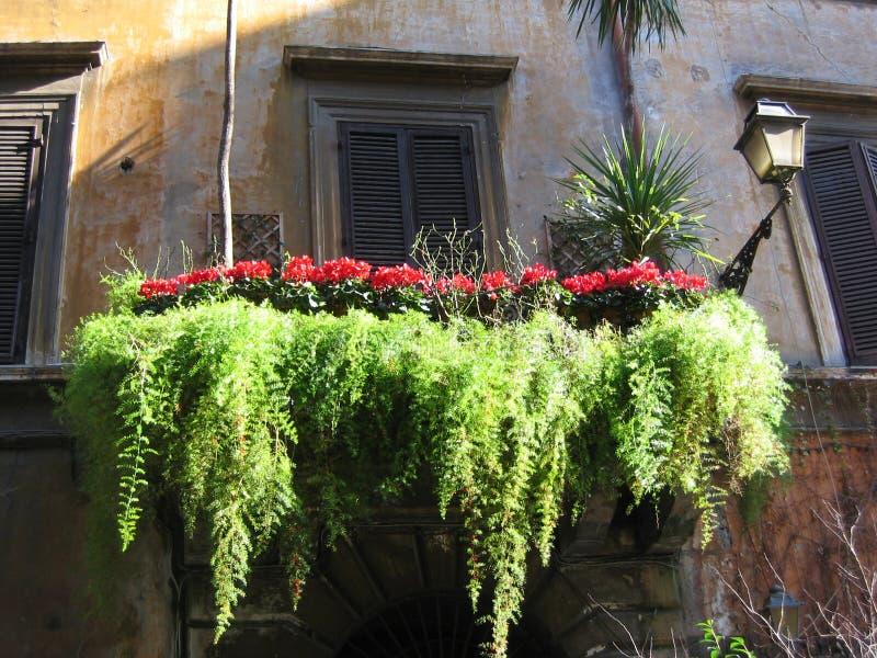 罗马的历史中心的一个典型阳台有一些红色仙客来和落的绿色植物的 意大利 库存照片