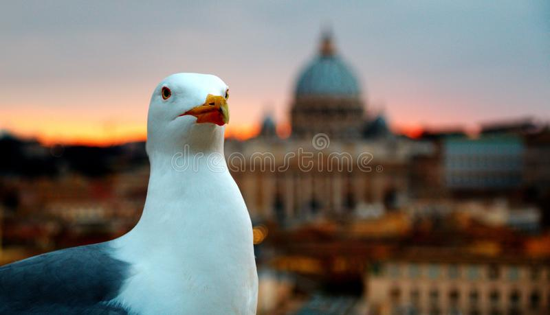 罗马,梵蒂冈,意大利 圣皮特圣徒・彼得';s大教堂 免版税库存图片